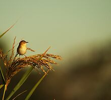 A Small Bird by scott Berry