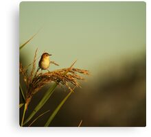 A Small Bird Canvas Print