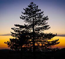 Tree by Apostolos Mantzouranis