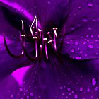 Purple by Joseph D'Mello