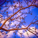 Branches in blue by Joseph D'Mello