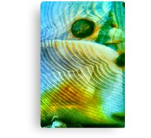 Baby Bird In Folded Wings (macro abstract) Canvas Print
