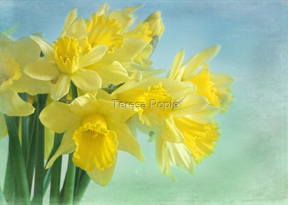 spring cheerfulness by Teresa Pople
