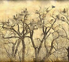Great Blue Heron Colonies Fine Art by Bo Insogna