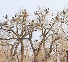 Great Blue Heron Hangout by Bo Insogna