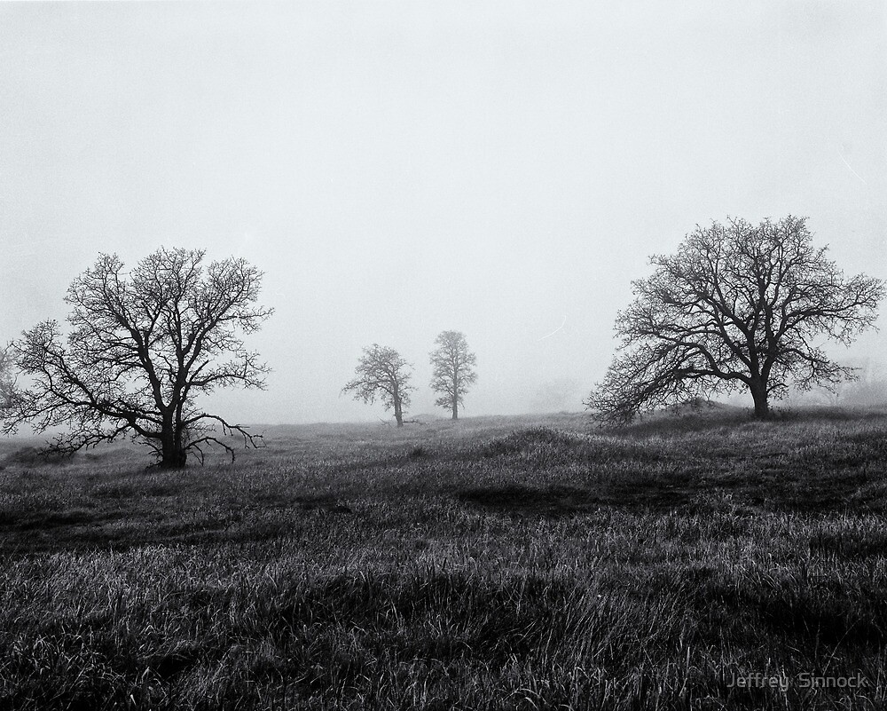Morning Fog Paradise California 1985 by Jeffrey  Sinnock
