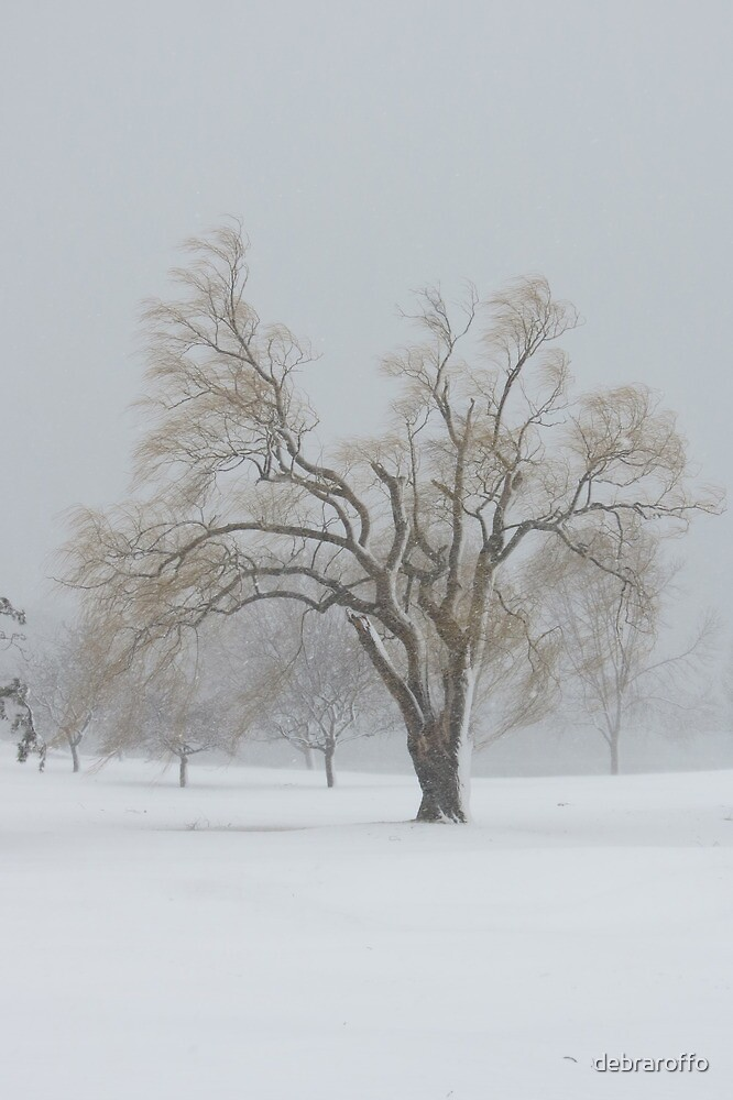 Standing alone in a winter storm  by debraroffo