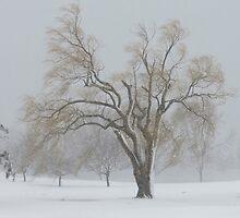 Standing alone in a winter storm  by debraroffo