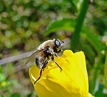 Bee Mimic on Primrose by MotherNature