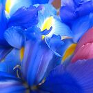 Spring Flowers in the city by Lee d'Entremont