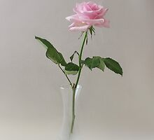 Pink Still Life by AnnDixon