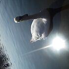 Swan by MiyuSusy