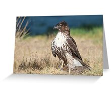 Red-tailed Hawk: A Successful Hunt Greeting Card