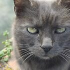 my cat, Indovina by MiyuSusy