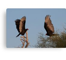 Two Vultures Canvas Print