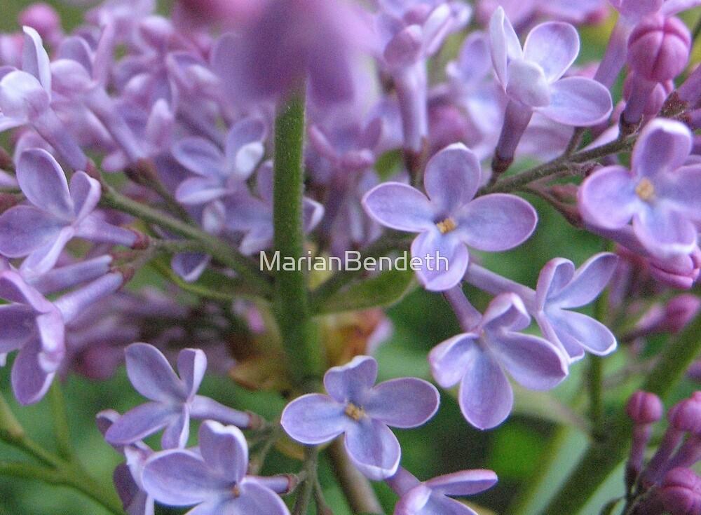 Lilac fair by MarianBendeth