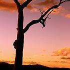 Dusky Hues of Autumn No. 2 ... by Erin Davis