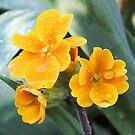 Spring Pansies (Viola) by Ludwig Wagner