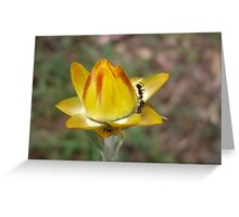 Ants & Yellow Flower Greeting Card