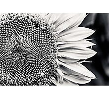 Meeting the Flower  Photographic Print
