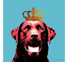 Dog with a crown. Photographic Print