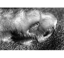 More Paw Photographic Print