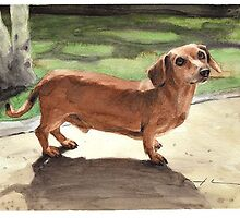 Buzz the Dachshund by Mike Theuer