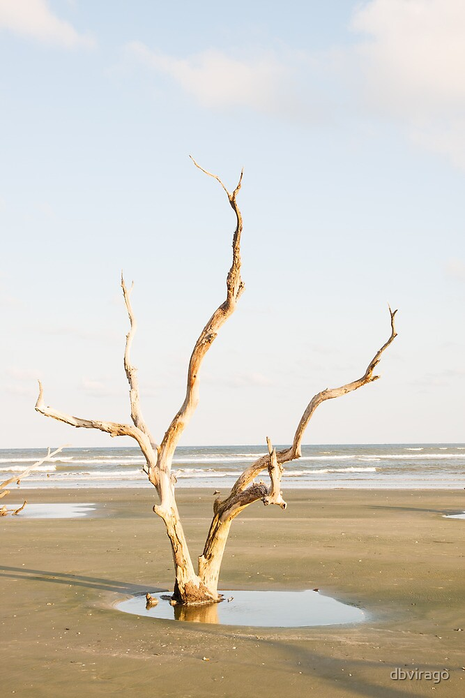 Driftwood Pointing Toward Ocean by dbvirago