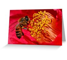Bee on Flower Stamens Greeting Card
