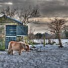 HDR - Horse in Field of Snow by Dave  Frost