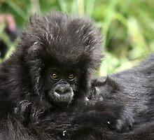 Baby Mountain Gorilla by CharlotteMorse