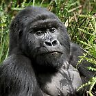 Wild Mountain Gorilla by CharlotteMorse