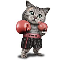 BOXING CAT Photographic Print