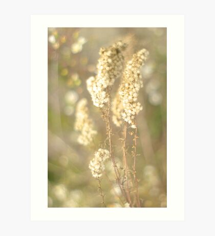 Dried Wildflower Art Print