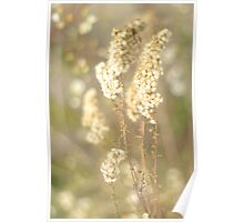 Dried Wildflower Poster
