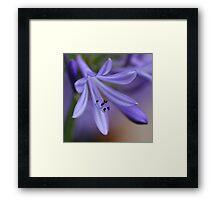 spring splendour Framed Print