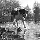 Splashing  by James Taylor