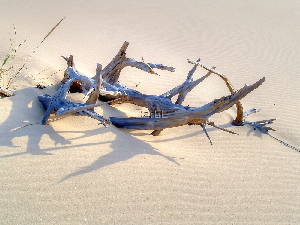 Abstract Driftwood by BarbL