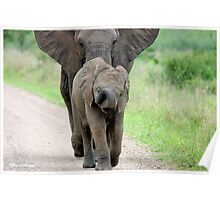 I CAN'T WALK FASTER! THE AFRICAN ELEPHANT – Loxodonta Africana - Afrika Olifant Poster