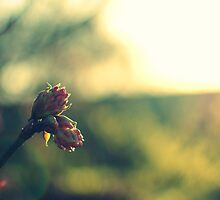 flower buds by Andy Fairgrieve