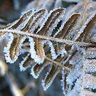 Frozen Fern by millymuso