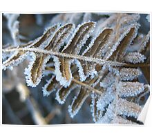 Frozen Fern Poster