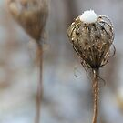 A snow crown.. by Tamara Travers