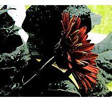 Moody Flower Photographic Print