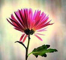 just a flower.. by JOSEPHMAZZUCCO