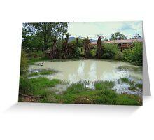 Sulphur Pool Rotorua New Zealand Greeting Card