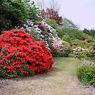 A New Zealand Garden by R-Summers