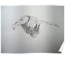 """""""Vulture sketch"""" Poster"""