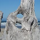 DRIFTWOOD art prints Ocean Coastal Shore by BasleeArtPrints