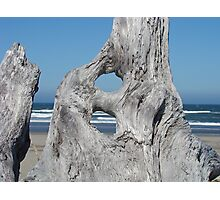DRIFTWOOD art prints Ocean Coastal Shore Photographic Print